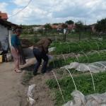 Предоставяне на агрономически консултации в с. Стряма - 21.05.2014 г.