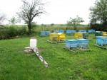Проучване на предложение за закупуване на пчелни семейства в с. Българово - 02.06.2014 г.