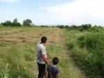 Проучване на предложение за закупуване на балировачка в с. Шейново - 26.06.2014 г.