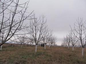 "Мониторинг на инициатива ""Закупуване на черешова градина"" - 01.12.2014 г."