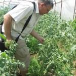 Проследяване на развитието на земеделските култури и предоставяне на агрономически консултации в гр. Перущица - 03.06.2015 г.