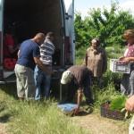 Участници в програмата развиват сътрудничество с търговци от Румъния - 03.06.2015 г.