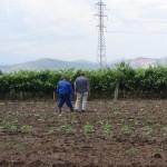 Предоставяне на агрономически консултации на участници по Програмата от гр. Перущица - 19.06.2015 г.
