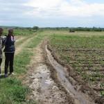 Предоставяне на агрономически консултации в с. Чалъкови - 26.06.2015 г.