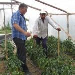 Проследяване на фитосанитарното състояние на отглежданите земеделски култури и предоставяне на агрономически консултации в с. Чалъкови - 26.06.2015 г.