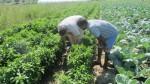 Агроконсултации на земеделски стопани в с. Чалъкови - 01.09.2015 г.