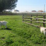Social Farming – Social Impact (SO.Fi.), Erasmus + – 10-11 април 2017 г.
