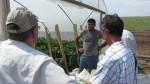 Проследяване на фитосанитарното състояние на отглежданите земеделски култури и предоставяне на агрономически консултации в с. Чалъкови - 30.06.2015 г.