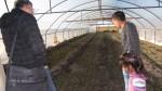 Агрономически консултации - 12.2015-03.2016 г.